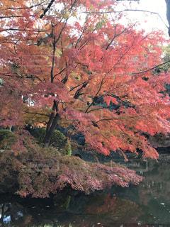 山を背景にした木の写真・画像素材[2833774]