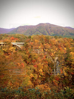 山を背景にした木の写真・画像素材[2833768]