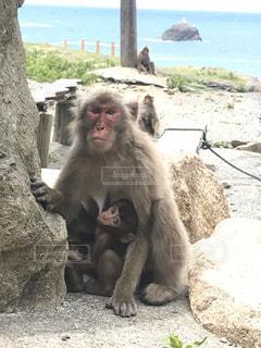岩の上に座っている猿の写真・画像素材[2848757]