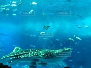 水の下で泳ぐ魚の写真・画像素材[2745271]
