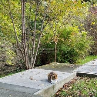 秋の草木に馴染む三毛猫の写真・画像素材[2750072]