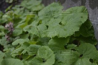 緑の写真・画像素材[106645]