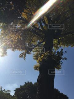 秋の大木の写真・画像素材[2754170]