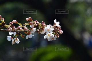 花の写真・画像素材[2749367]