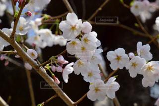 花の写真・画像素材[2749368]