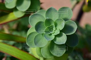 多肉植物の写真・画像素材[2749479]