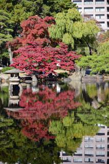 水辺の紅葉の写真・画像素材[2749652]