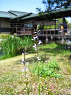 小花の写真・画像素材[2751306]