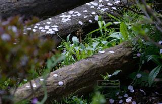春の芽吹きの写真・画像素材[2808431]