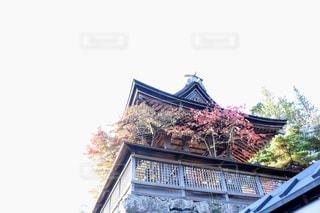 仁和寺の紅葉の写真・画像素材[2892584]