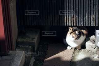 セメントベンチの上に座っている猫の写真・画像素材[4812533]