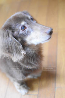 カメラを見ている犬の写真・画像素材[2782066]