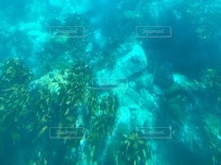 水中の写真・画像素材[2751663]