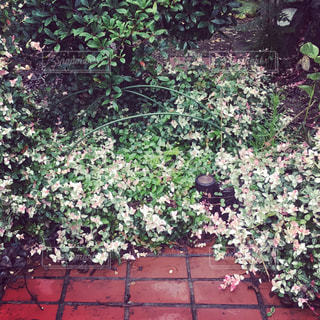 庭園の緑の植物の写真・画像素材[878782]