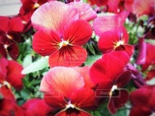 花のクローズアップの写真・画像素材[2988876]