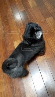 犬の写真・画像素材[2753072]