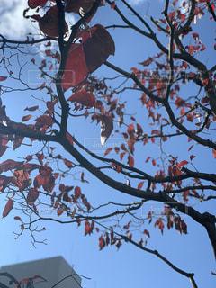 秋の写真・画像素材[2753411]