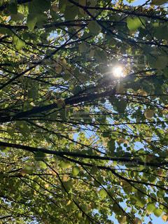 木漏れ日の写真・画像素材[2754922]