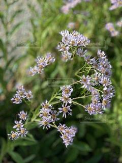野に咲く花の写真・画像素材[2760661]