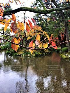雨の中の紅葉の写真・画像素材[2774712]