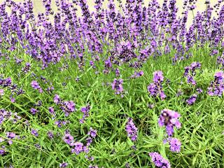 街中に咲く花の写真・画像素材[2780147]