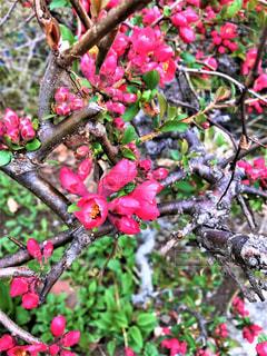 春の訪れの写真・画像素材[2794802]