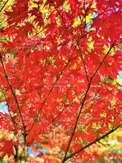 秋の写真・画像素材[2794804]