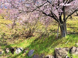清々しい春の写真・画像素材[3319001]