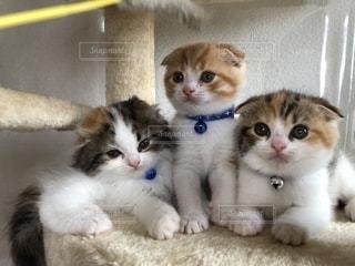 3匹の猫の写真・画像素材[2762786]