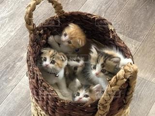 籠の中の子猫たちの写真・画像素材[2762789]