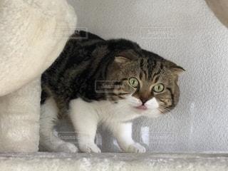 見つめる猫の写真・画像素材[2764839]
