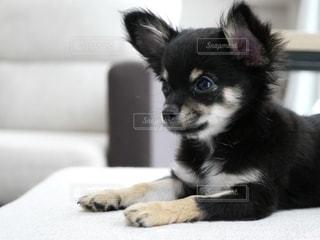 犬の写真・画像素材[2754447]