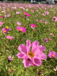 花の写真・画像素材[2756418]