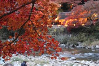 秋の写真・画像素材[2759787]