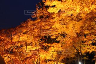 秋と夜の写真・画像素材[2759789]
