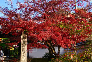 素晴らしい紅葉の写真・画像素材[2772610]