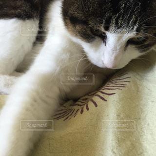 猫の写真・画像素材[127208]