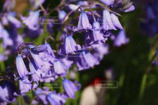 花のクローズアップの写真・画像素材[3312985]