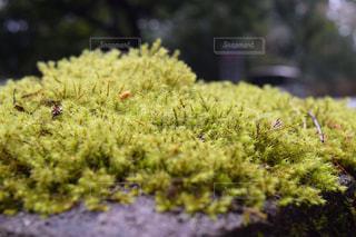 苔の写真・画像素材[2766829]