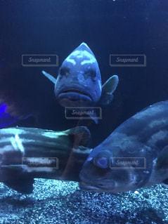 深海魚と目が合いましたの写真・画像素材[2768326]