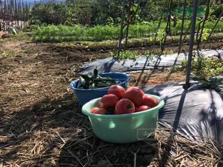 夏の収穫品の写真・画像素材[2776157]