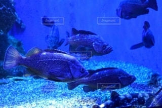魚の写真・画像素材[2814204]