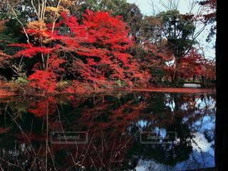 湖面に映る紅葉の写真・画像素材[2773767]