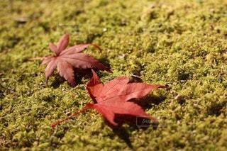 秋の仲良しの写真・画像素材[2775457]
