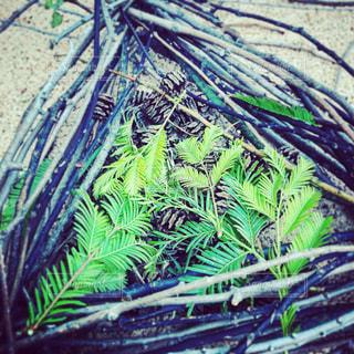 植物のクローズアップの写真・画像素材[2416069]
