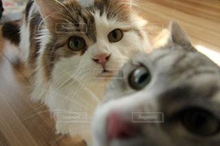 猫の写真・画像素材[107691]