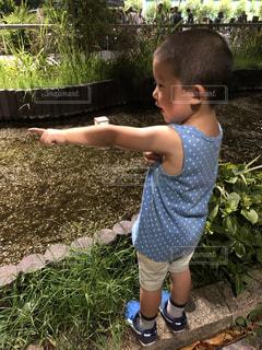 灯籠流しを見ている少年の写真・画像素材[2779138]
