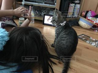 猫の写真・画像素材[604751]