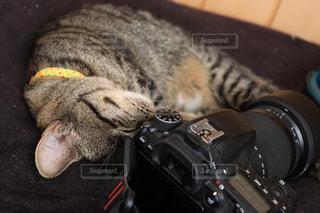 カメラを光よけに使うネコの写真・画像素材[766903]