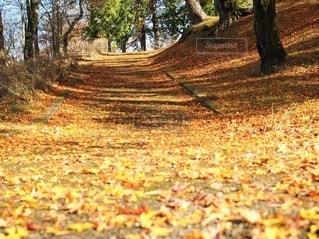 黄色い絨毯の写真・画像素材[2781707]